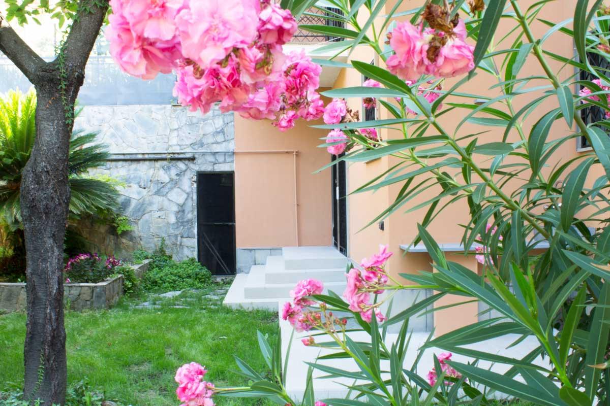 Oleandro fiorito in luglio a Genova